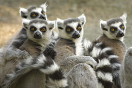 Conservation & Care in Madagascar