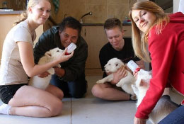 Animal welfare volunteering and Conservations