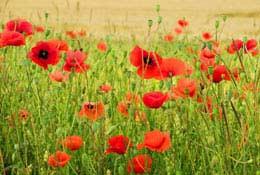 school tours WW1 Battlefields
