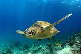 Discover Ecuador & Galapagos photograph