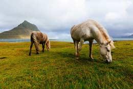 school trip at GapForce Iceland Trip