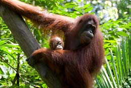 Borneo Jungle Expedition