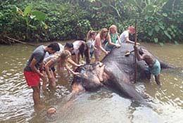 school tours Volunteer & Adventure School Trip to Sri Lanka - From £699 per person