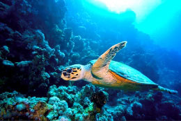 Turtle conservation and scientific studies in Costa Rica