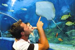 Blue Reef Aquarium photograph