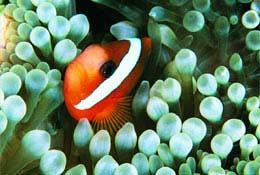 school trip at Blue Reef Aquarium