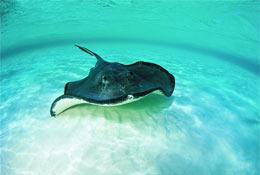 Blue Reef Aquarium school groups