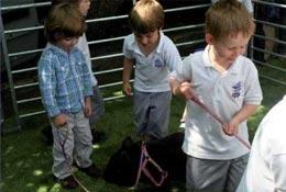Kew Little Pigs school groups