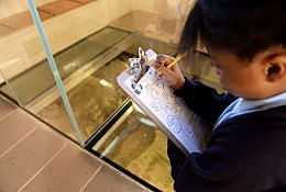 King Richard III Visitor Centre school groups