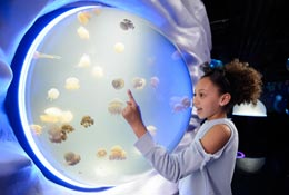 SEA LIFE London school groups